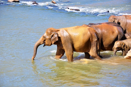 Sri_Lanka_2012_083