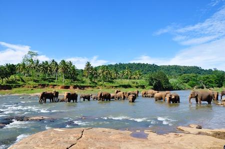 Sri_Lanka_2012_136