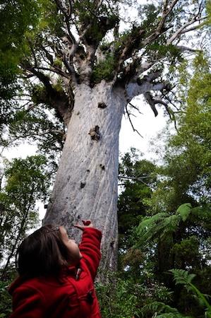 NZ_AUS_2013_464