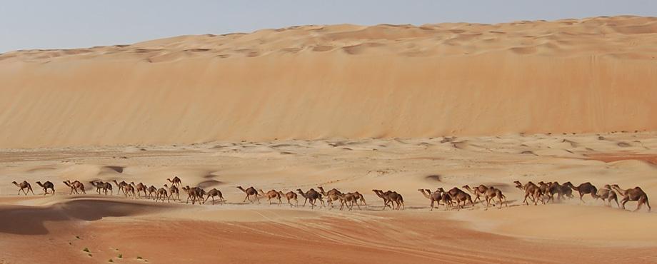 Camel Header